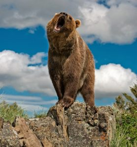 Grizzly-bear-arcgis-1