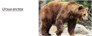 bearen3